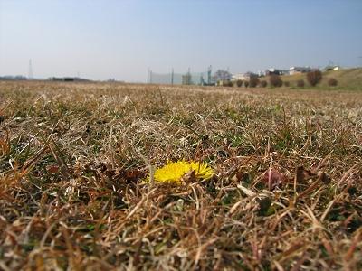 ところにより春_c0091679_275040.jpg