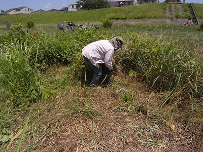 草刈り隊_c0091679_2331372.jpg