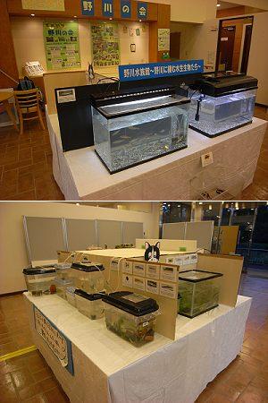 野川水族館 展示中_c0091679_2246522.jpg