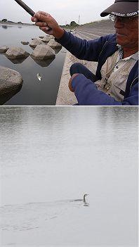 アユ釣り最後の日_c0091679_14183882.jpg