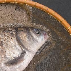ヘラブナ釣りのカタチ_c0091679_0194297.jpg