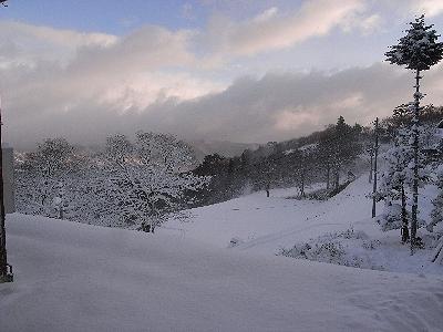 雪の下のお魚_c0091679_271146.jpg