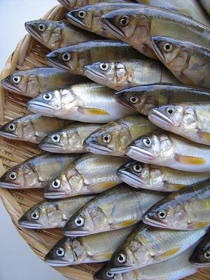 多摩川漁協の総代会_c0091679_23513740.jpg