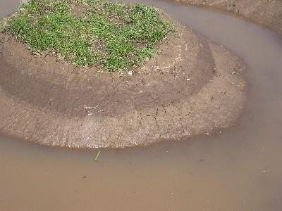 水がたまった・・・けど_c0091679_11454183.jpg