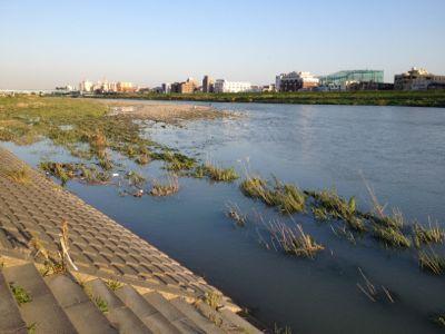 多摩川の水はどうなった?_c0091679_1752959.jpg