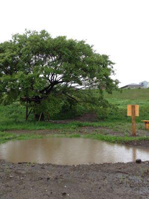 池に水がたまり過ぎ_c0091679_357728.jpg