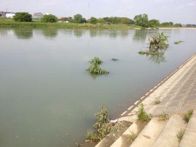 5/6の水辺の楽校は中止です_c0091679_8351088.jpg