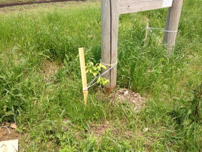 木を植えてみた_c0091679_12154621.jpg