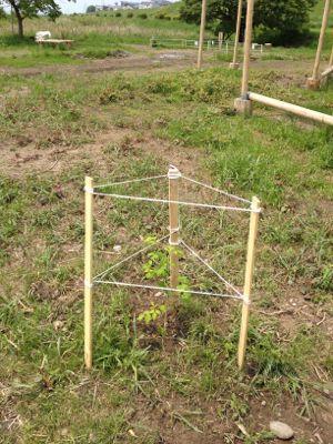 木を植えてみた_c0091679_12155096.jpg
