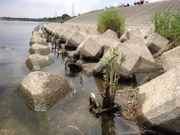 今年はじめての水辺ガサガサ_c0091679_17472144.jpg