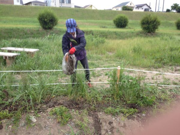 テリハノイバラを植えよう_c0091679_22594751.jpg