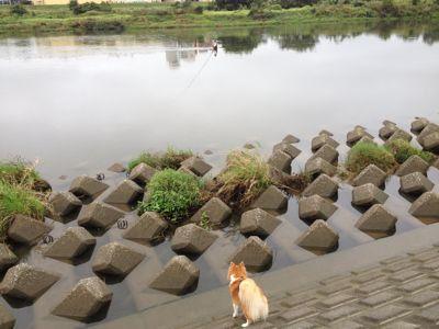 今日の水辺の楽校遊びの日は_c0091679_7282712.jpg