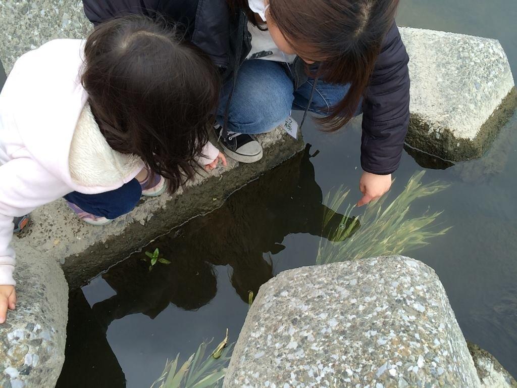 5月3日(日)今年度最初の水辺ガサガサです♪_c0091679_17061157.jpg