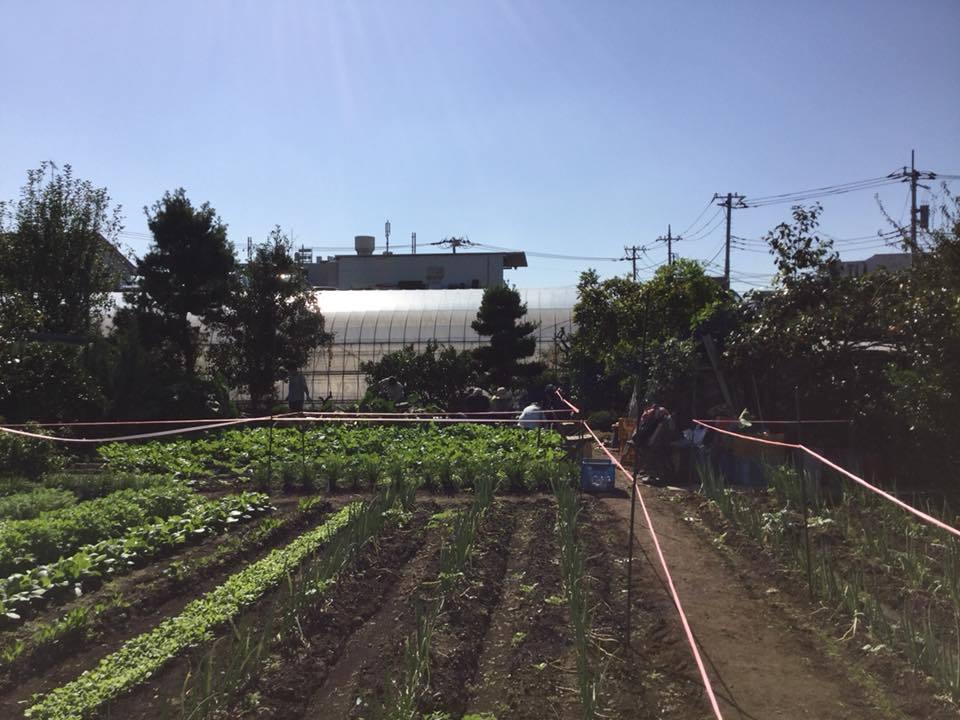 11/18「みんなの畑」かわべ農園_c0091679_13125119.jpg