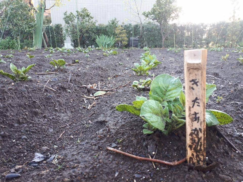 「みんなの畑・かわべ農園」4月15日・薪がやってくる_c0091679_09182639.jpg