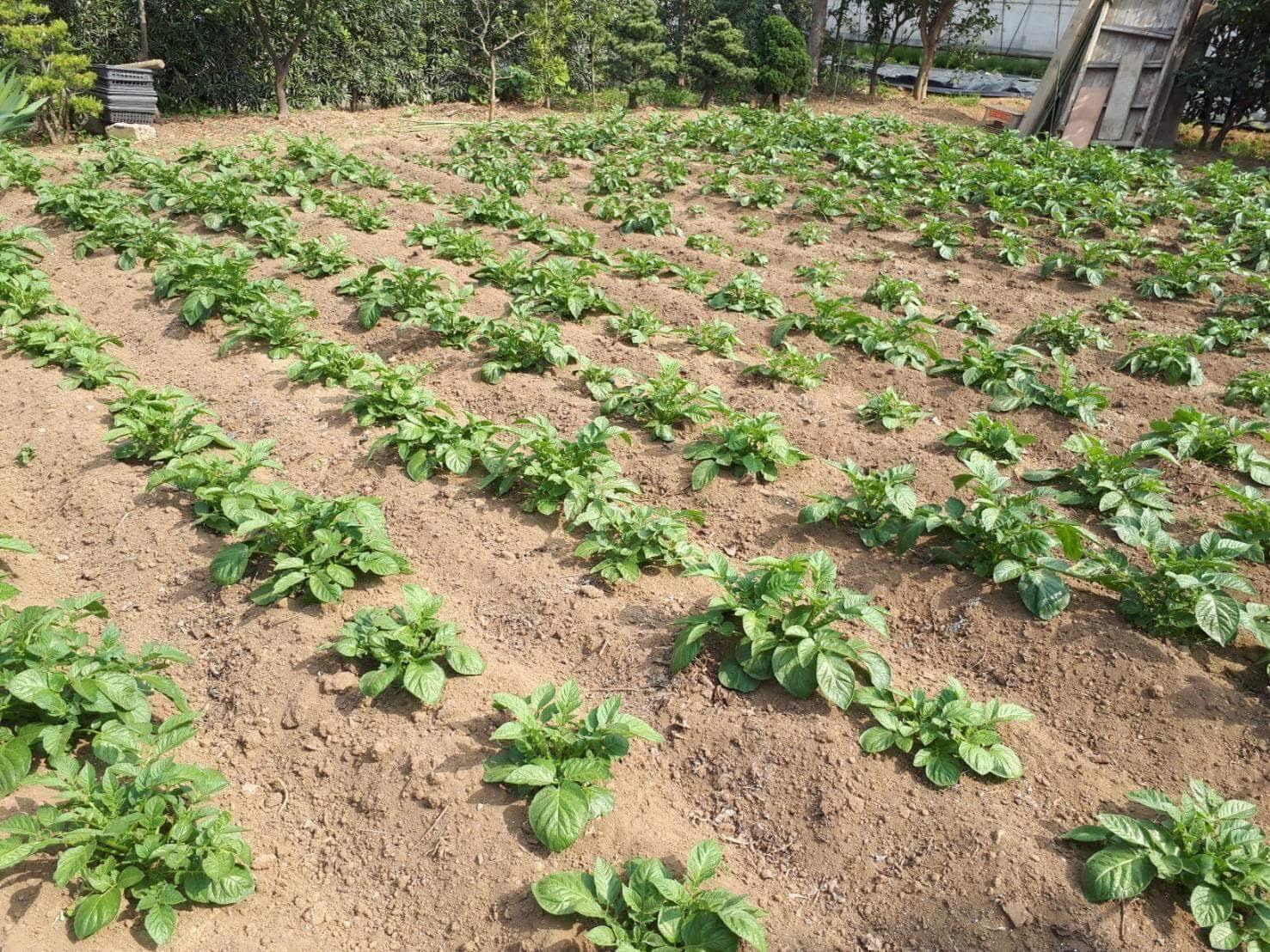 2019年4月28日(日)みんなの畑・かわべ農園~なつやさいの苗植え~_c0091679_10011103.jpg