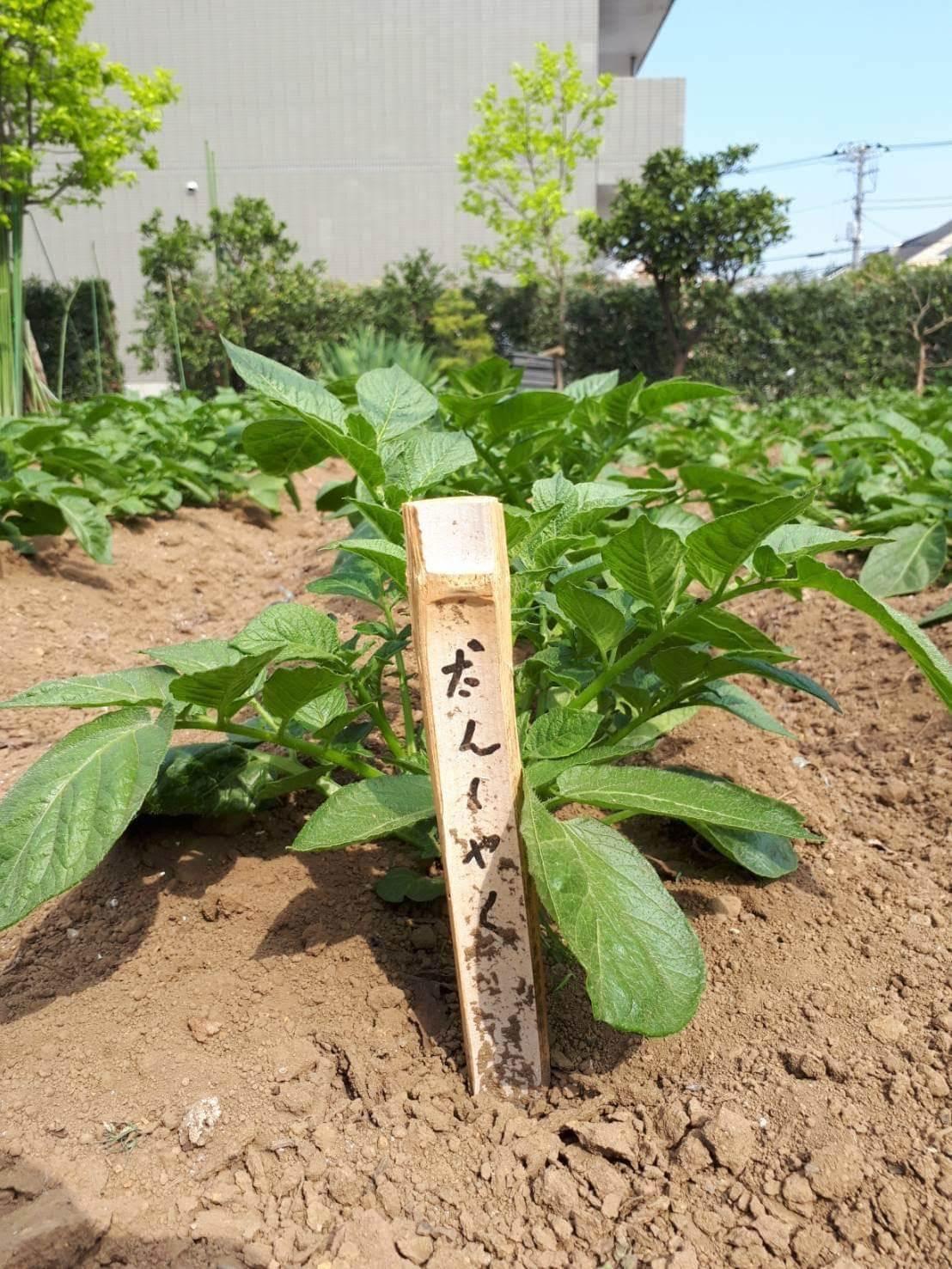 2019年4月28日(日)みんなの畑・かわべ農園~なつやさいの苗植え~_c0091679_10323653.jpg