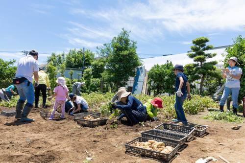 2019年6月29日夏やさい収穫まつりは、7月20日(土)に延期します_c0091679_23241847.jpg
