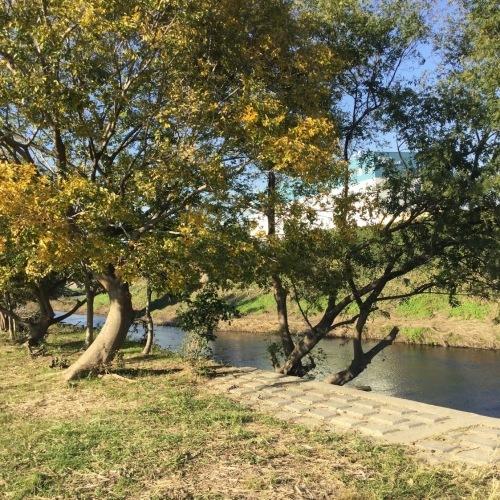 11月17日の原っぱアトリエは野川ベースで実施します。_c0091679_15214862.jpg