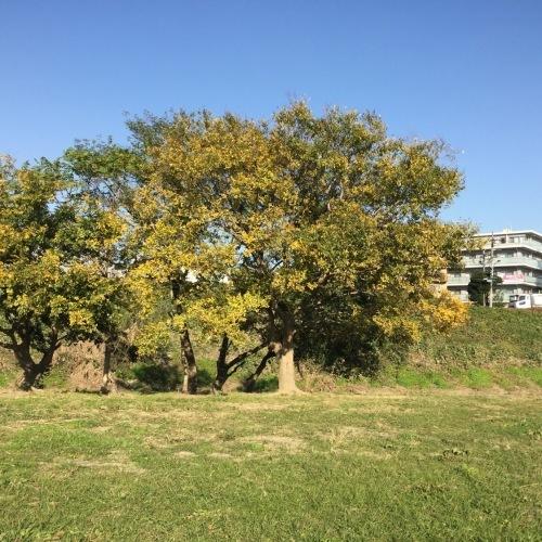 11月17日の原っぱアトリエは野川ベースで実施します。_c0091679_15222521.jpg